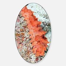 Peppermint sea cucumber Sticker (Oval)