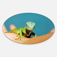 Pet iguana Decal