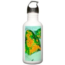 Coloured TEM of cress  Water Bottle