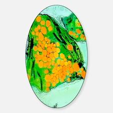 Coloured TEM of cress chloroplast g Decal