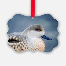 Patagonian crested duck drake Ornament