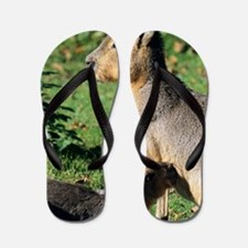 Patagonian cavy and young Flip Flops