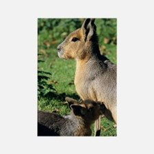 Patagonian cavy and young Rectangle Magnet