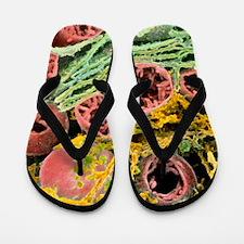 Coloured SEM of mitochondria Flip Flops