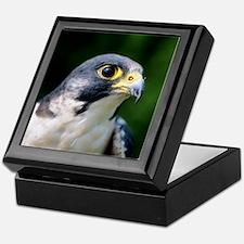 Peregrine falcon Keepsake Box