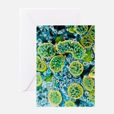 Coloured SEM of mitochondria in ovar Greeting Card