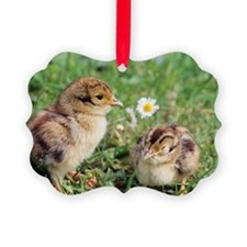 Pheasant chicks Ornament