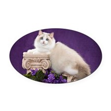 Ragdoll Cat Wall Calendar Oval Car Magnet