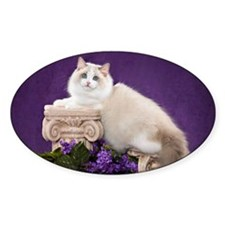 Ragdoll Cat Wall Calendar Decal