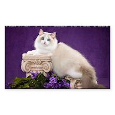 Ragdoll Cat Wall Calendar Decal