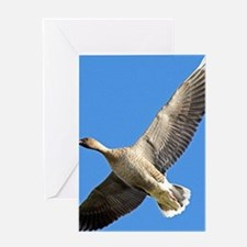 Pink-footed goose Greeting Card