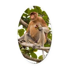 Proboscis monkey Oval Car Magnet