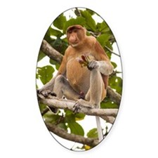 Proboscis monkey Decal