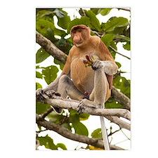 Proboscis monkey Postcards (Package of 8)