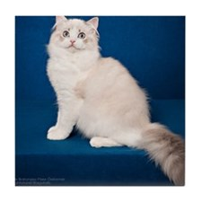 Ragdoll Cat Wall Calendar Tile Coaster