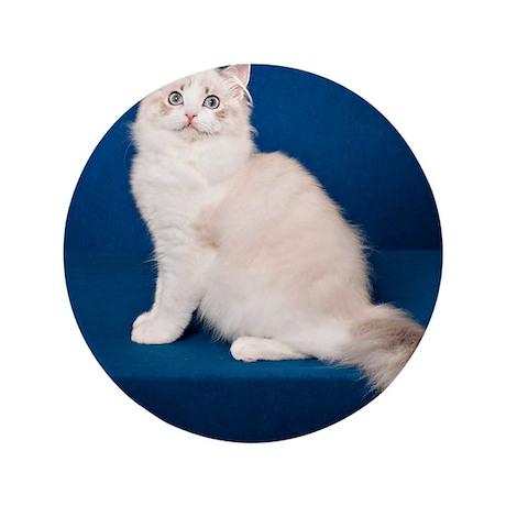 """Ragdoll Cat Wall Calendar 3.5"""" Button"""