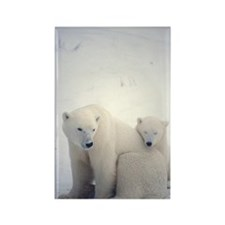 Polar bear and cub Rectangle Magnet