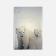 Polar bear and cub Rectangle Magnet