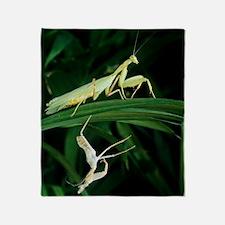 Praying mantis with its shed skin Throw Blanket