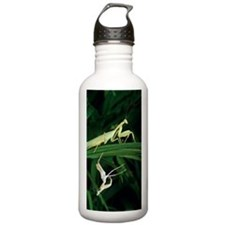 Praying mantis with it Sports Water Bottle