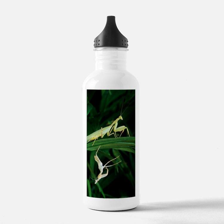 Praying mantis with it Water Bottle