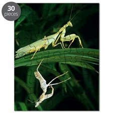 Praying mantis with its shed skin Puzzle