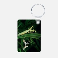 Praying mantis with its sh Keychains