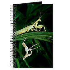 Praying mantis with its shed skin Journal