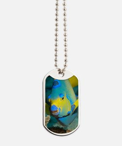 Queen angelfish Dog Tags