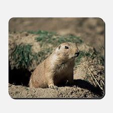 Prairie dog Mousepad