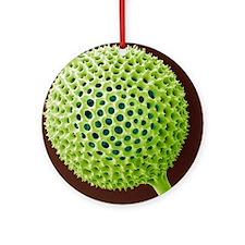 Radiolarian, SEM Round Ornament