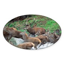 Red deer herd Decal