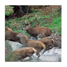 Red deer herd Tile Coaster