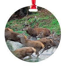 Red deer herd Ornament