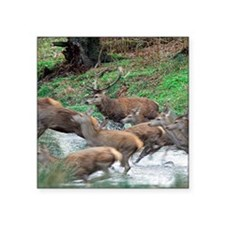 "Red deer herd Square Sticker 3"" x 3"""