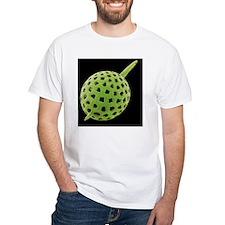 Radiolarian, SEM Shirt