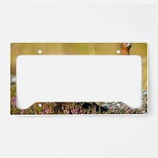 Red grouse License Plate Holder