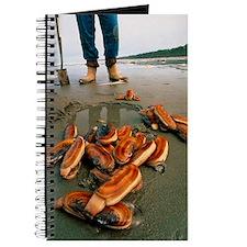 Razor clams dug up on a beach Journal