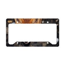 Red fox License Plate Holder