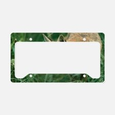 Red fox hunting License Plate Holder