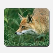 Red fox hunting Mousepad