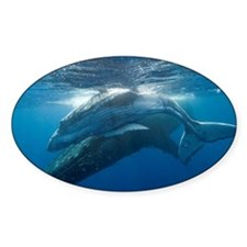 Humpback Whales Decal