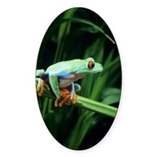 Red-eyed tree frog Decal