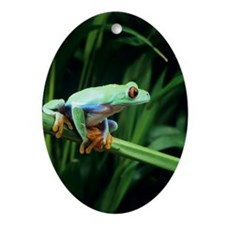 Red-eyed tree frog Oval Ornament