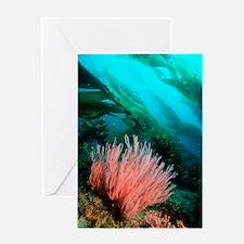 Red gorgonian Greeting Card