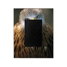 Red kite Picture Frame