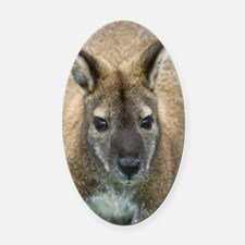 Red-necked wallaby Oval Car Magnet