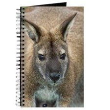 Red-necked wallaby Journal