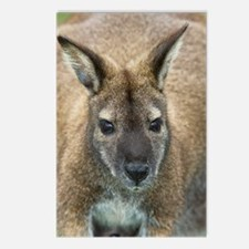 Red-necked wallaby Postcards (Package of 8)