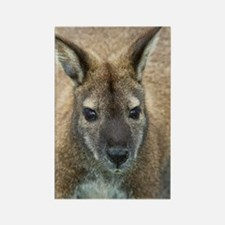 Red-necked wallaby Rectangle Magnet